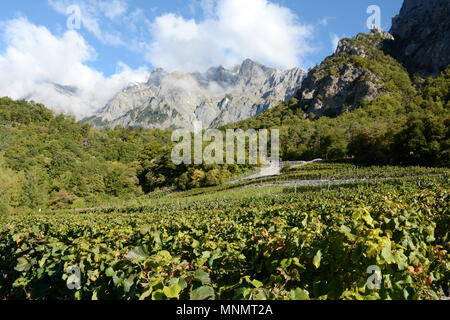 Mountain vineyards seen from the Swiss Wine Trail, near the town of Chamoson, in the upper Rhone Valley, canton of Valais, southern Switzerland. - Stock Photo