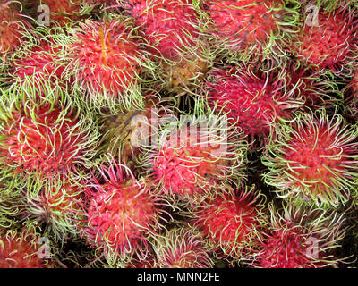 Rambutan, Nephelium Lappaceum, the lychee like fruit with long hooked spines, Costa Rica, Central America - Stock Photo