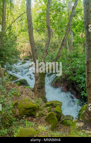 The Hermon Stream (Banias) Nature Reserve, Northern Israel - Stock Photo