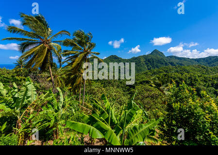 Tropical Rainforest on the Caribbean island of St. Lucia. It is a paradise destination with a white sand beach and turquoiuse sea. - Stock Photo