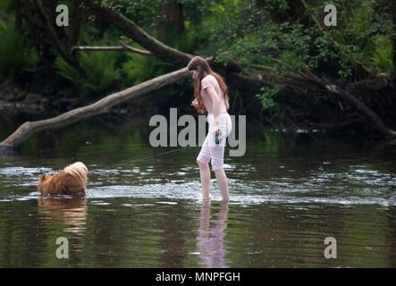 New Mills  Derbyshire  UK  19th  May 2018  A girl and her dog walk across the River Sett to cool off. Credit: John Fryer/Alamy Live News - Stock Photo
