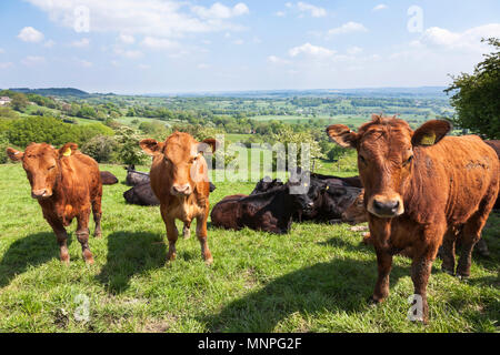 Plaistow Green, Derbyshire, UK. 19th May 2018. A typically English rural scene on a warm spring day in the Derbyshire Dales near to the hamlet of Plaistow Green. Credit: Mark Richardson/Alamy Live News - Stock Photo
