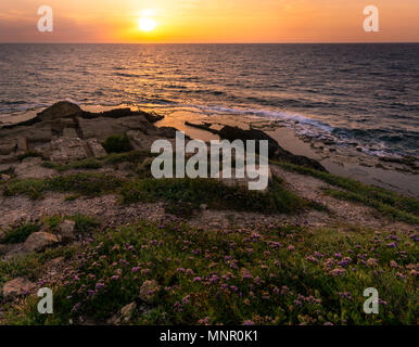 beautiful golden sunset shines on purple flowers and stones in the foreground,giant rocks and pools in the middleground.Mediterranean sea, Israel - Stock Photo