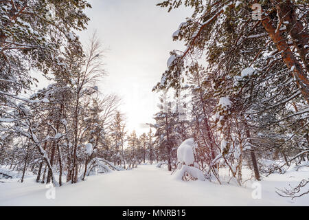Beautiful winter landscape of forest with snow covered trees - Stock Photo