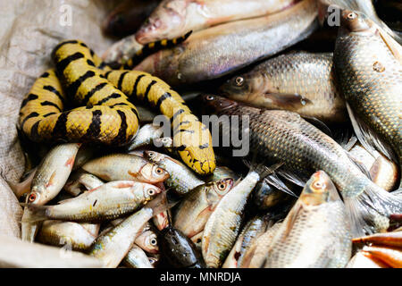 Fresh fish at seafood market in Cambodia - Stock Photo
