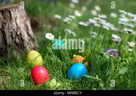 Six colorful Easter eggs hidden in a grass and flowers - Stock Photo