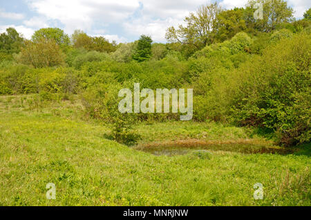 A view of Alderford Common Site of Special Scientific Interest and nature reserve at Alderford, Norfolk, England, United Kingdom, Europe. - Stock Photo
