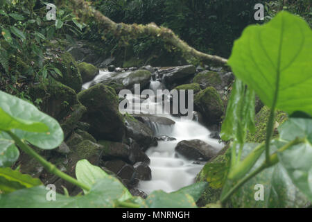 Biological reserve - Stock Photo