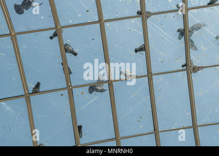 pigeons on glass roof of St Enoch Station, Glasgow, Scotland, UK - Stock Photo