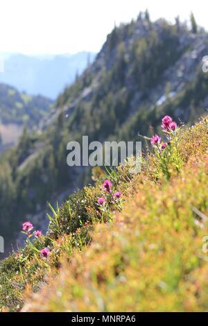 Hillside flowers bloom in the summer sun at Mt. Rainier National Park's Sunrise Visitor Center. - Stock Photo