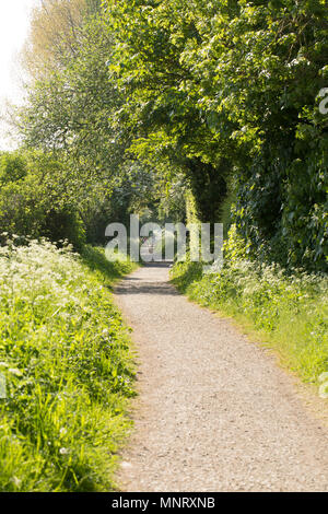 Looking in the direction of Sturminster Newton on the Dorset Trailway near Fiddleford Mill. The Dorset Trailway is largely made up of trails that foll - Stock Photo