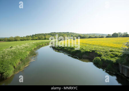 Looking upstream at the Dorset Stour river viewed from a bridge near Fiddleford Mill on the Dorset Trailway near Sturminster Newton. The Dorset Trailw - Stock Photo