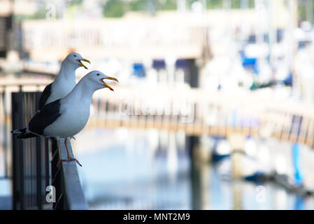 Pair of Seagull Squawking on rail - Stock Photo