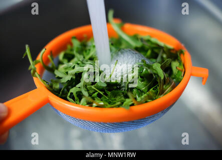 A female hand holds a fresh fragrant rukkola in a colander on the background of a metal sink under running water from the tap. Wash greens before eati - Stock Photo