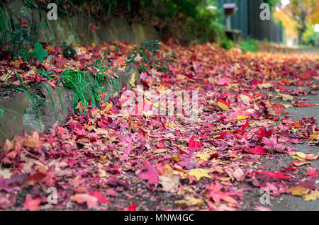 Autumn leaves stripped from the trees by the winds lay gathered on the pavement  in a burst of color - Stock Photo