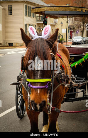 Horse with Easter bunny ears, Olde Towne Carriage ride, outside Visitors Center, 706 Caroline Street, Fredericksburg, Virginia - Stock Photo