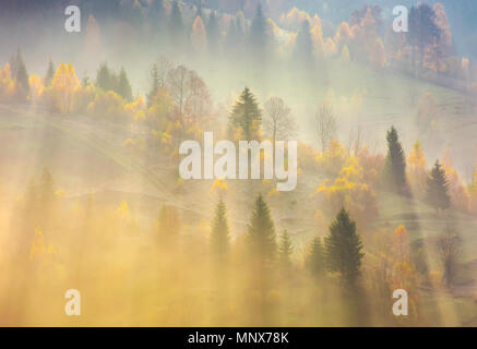 fog over the forest in morning light. beautiful nature background. trees with yellow foliage on rolling hills in autumn. amazing atmosphere in Carpath - Stock Photo
