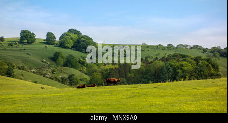 Pegsdon Hills and Hoo Bit, nature reserve in Pegsdon, Bedfordshire in the Chilterns Area of Outstanding Natural Beauty - Stock Photo