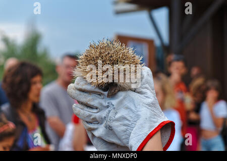 Hedgehogs released by RIAS in Ria Formosa Natural Park. Algarve, Portugal - Stock Photo