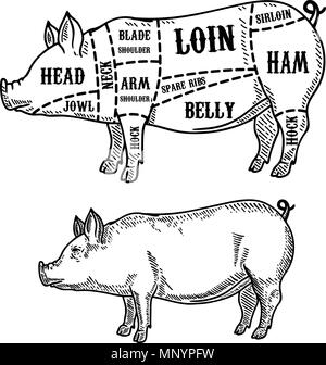 pork cuts butcher diagram  design element for poster  menu