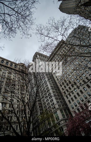 Tree branches against big buildings in Manhattan, New York. USA. April 30, 2018 - Stock Photo