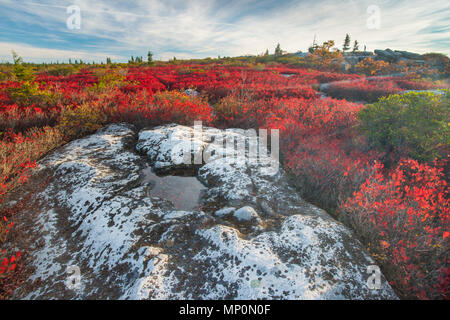 Autumn morning on Dolly Sods West Virginia - Stock Photo