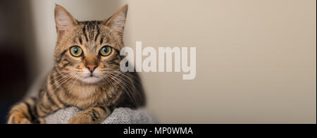 Relaxed domestic cat at home, indoor - Stock Photo