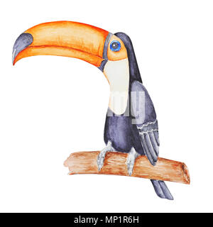 Cute tropical tucan sitting on the  branch  . Hand panted watercolor illustration isolated on white. - Stock Photo