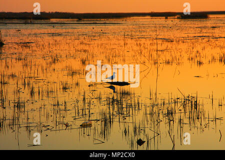 Seagull standing and waiting for someone on a small island in the lake. Sunset color reflected on the water what is give more warmness to the moment. - Stock Photo