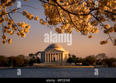 Washington, DC Cherry Blossom Festival - Stock Photo