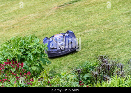 Husquarvna robot lawn mower on a sloping mowed lawn by a flower border, May 2018. - Stock Photo