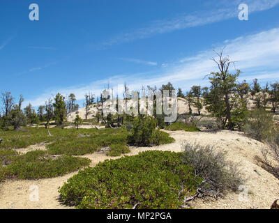 Ponderosa Pine Trees and Various Foliage Surviving Atop The Barren, Mountainous Plateau - Stock Photo