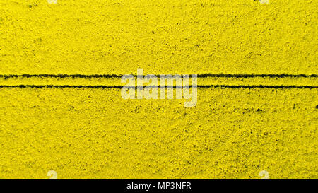 Aerial view of colorful rapeseed field in spring. Close-up. - Stock Photo