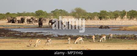 Elephants, giraffe and impalas around the waterhole - Stock Photo