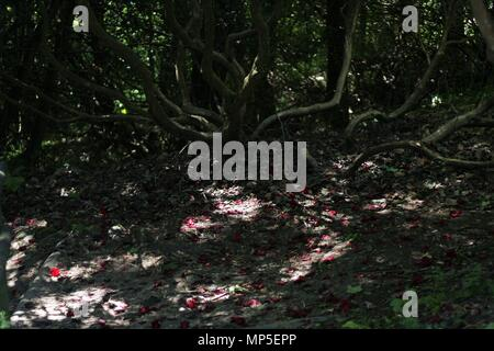 Red blossom and petals settle on floor path of an old growth forest in Kent, Britain. - Stock Photo