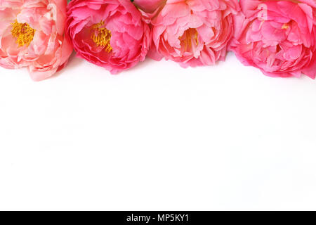 Styled stock photo. Feminine floral frame composition. Decorative web banner made of beautiful pink peonies. White background. Empty space. Flat lay, top view. Picture for blog. - Stock Photo