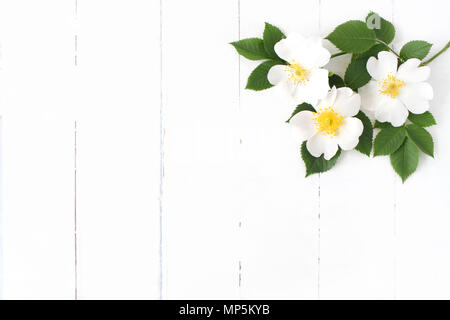 Styled stock photo. Feminine floral table composition with wild rose flowers on old white wooden background. Empty space. Top view. Picture for blog. - Stock Photo