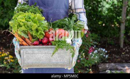 Unrecognisable female farmer holding crate full of freshly harvested vegetables in her garden. Homegrown bio produce concept. Sustainable living. - Stock Photo