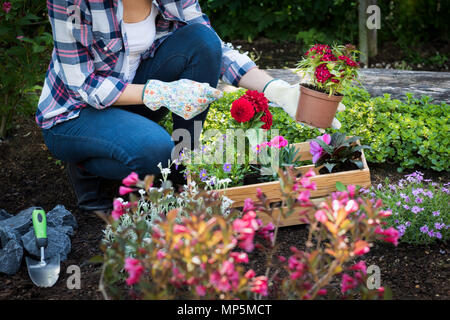 Unrecognisable female gardener holding beautiful flower ready to be planted in a garden. Gardening concept. Garden Landscaping business start up. - Stock Photo