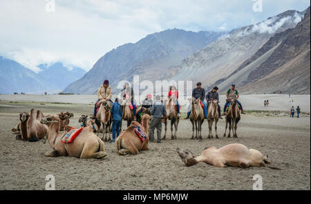 Ladakh, India - Jul 18, 2015. Tourists riding camels in Ladakh, India. Ladakh is the highest plateau in state of Jammu & Kashmir with much of it being - Stock Photo