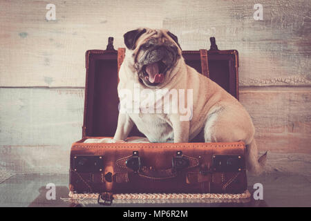 vintage filter and scene with old white pug lay down inside an old carrying case luggage. defocused background ancient style for wallpaper. lazy trave
