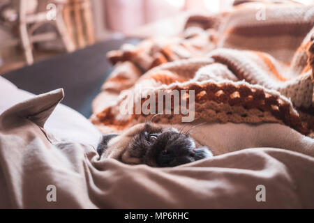Funny nice pug dog sleep on the sofa at home with a morning backlight from a window. Lazy concept