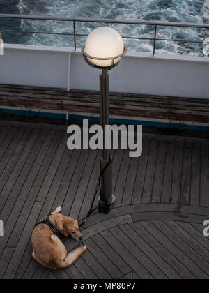 Sleeping dog attached to a lamp post on a ferry deck in late afternoon - Stock Photo
