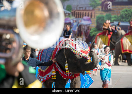 Elephants at the traditional Elephant Round Up Festival in the city of Surin in Isan in Thailand. Thailand, Isan, Surin, November, 2017 - Stock Photo