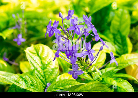 Purple spike flower to creative texture and pattern for design and decoration isolate on background.Soft focus. - Stock Photo
