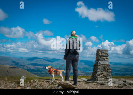 A Beagle Dog and their owner looking out across the Lake District from the top of The Old Man of Coniston, Cumbria, United Kingdom - Stock Photo