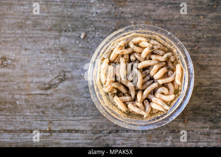 Close-up maggots warm in plastic container on old wooden background. Fishing  preparations concept. - Stock Photo