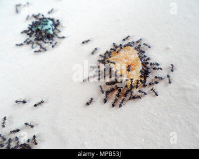 An army of Black garden ants, Lasius niger, swarm over crumbs of food left on a wall in Marmaris, Turkey - Stock Photo