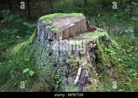 tree trunk with vegetation - Stock Photo