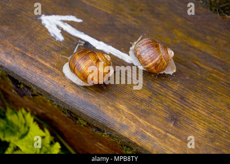 Two snails crawling on a wooden surface in the specified direction - Stock Photo